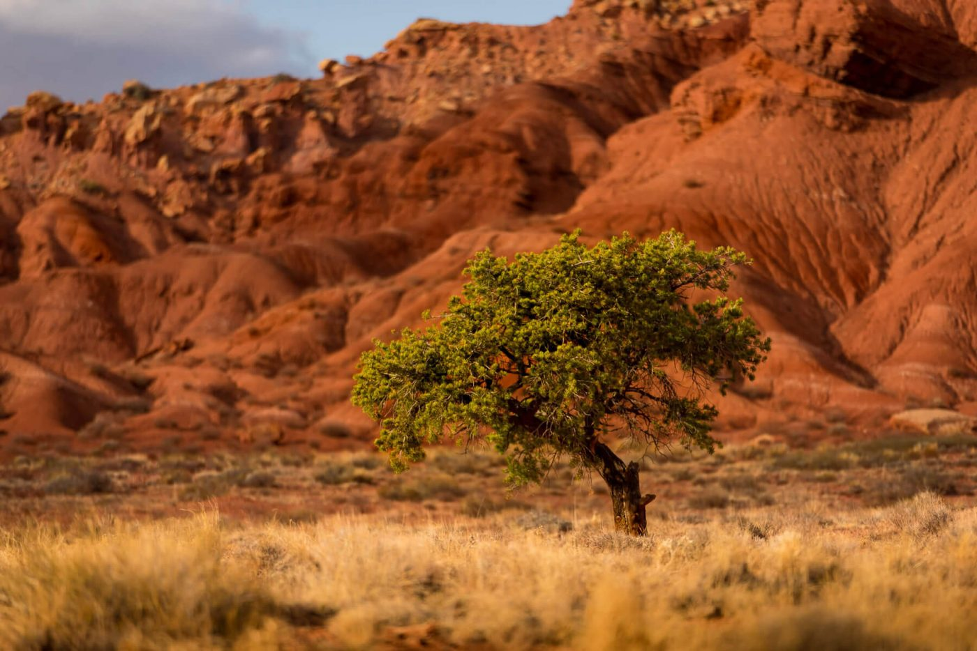 LONELY TREE – PHOTO DISSECTION